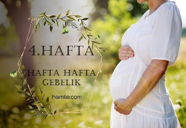4. Hafta Hamilelik