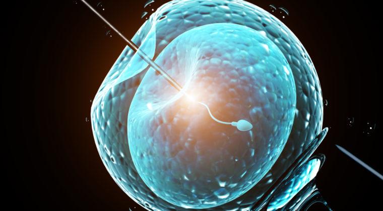 Tüp Bebekte Embriyo Tansferi