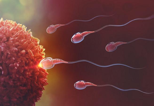 Koronavirüs hastalarında kısırlık ve sperm düşüklüğü tespit edildi